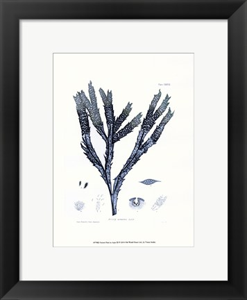 Framed Nature Print in Aqua III Print