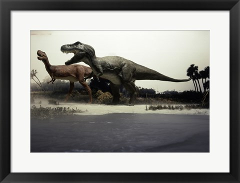 Framed Side profile of a tyrannosaurus rex chasing an albertosaurus Print