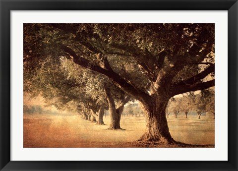 Framed Island Oak Print