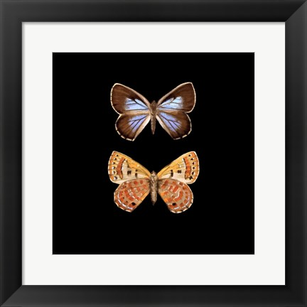 Framed Pair of Butterflies on Black Print