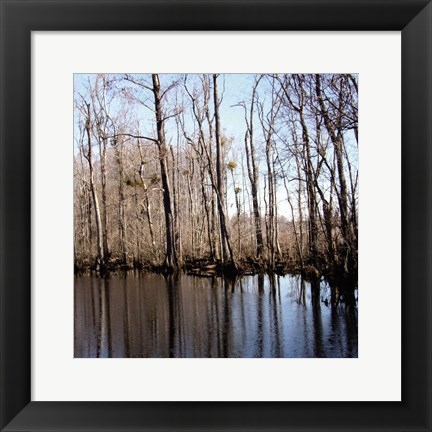 Framed Among the trees II Print