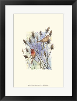 Framed House Finches Print