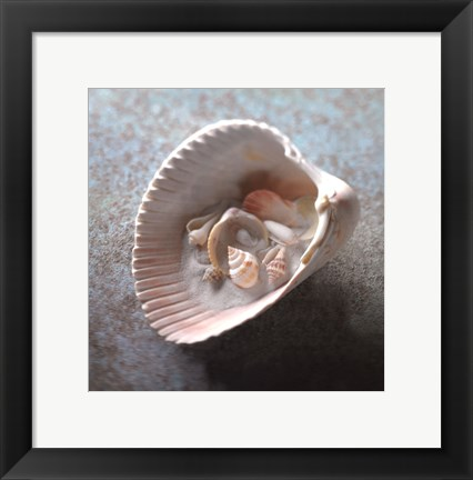Framed Shells in Shell Print