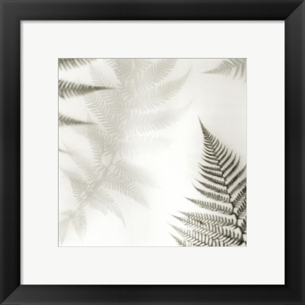 Framed Ferns No. 2 Print