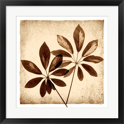 Framed Cassava Leaves Print