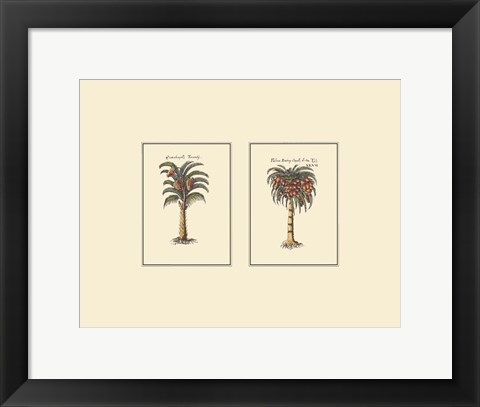 Framed Miniature Palm II Print