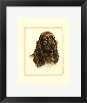 Framed Red Cocker Spaniel Print