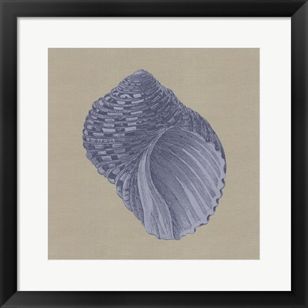 Framed Chambray Shells III Print