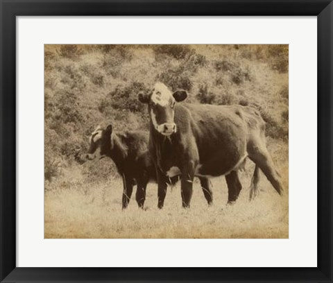 Framed Lone Star Cows II Print