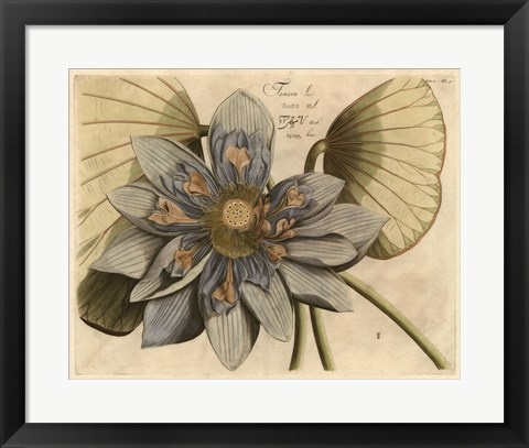 Framed Blue Lotus Flower I Print