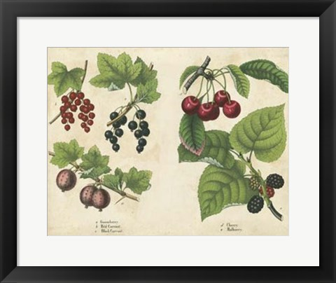 Framed Kitchen Fruits III Print