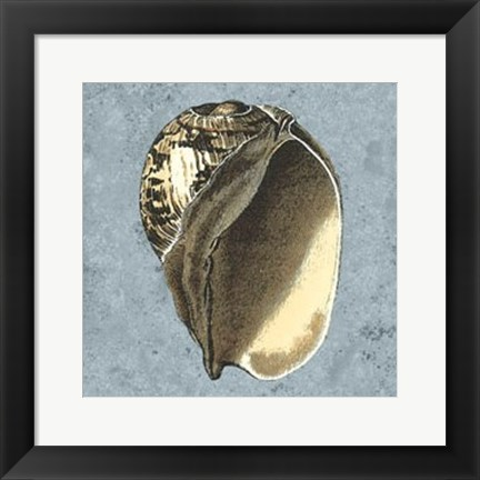 Framed Stonewashed Shells II Print