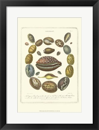 Framed Conchology Collection III Print
