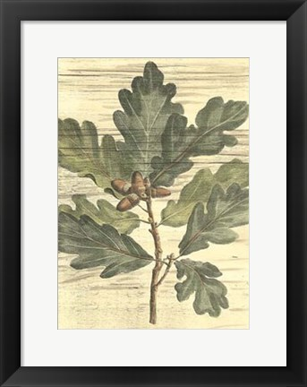 Framed Weathered Oak Leaves I Print