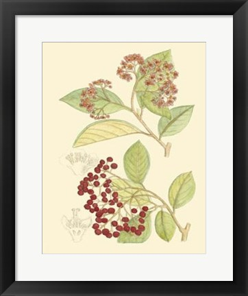 Framed Berries & Blossoms II Print