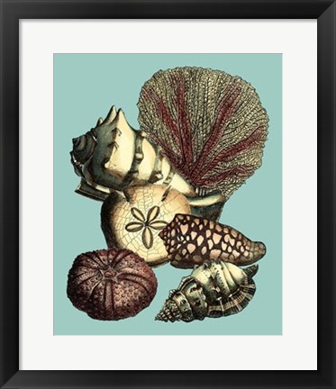 Framed Printed Shell & Coral Collection I Print