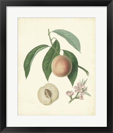 Framed Plantation Peaches I Print