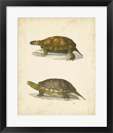 Framed Turtle Duo I Print