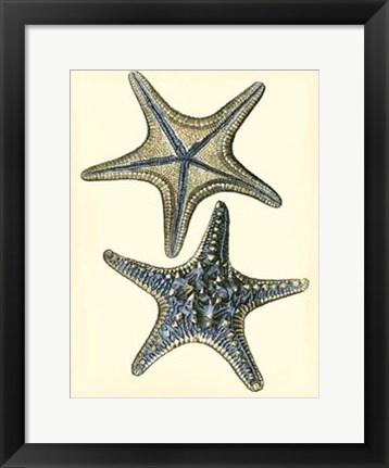 Framed Antique Blue Starfish II Print
