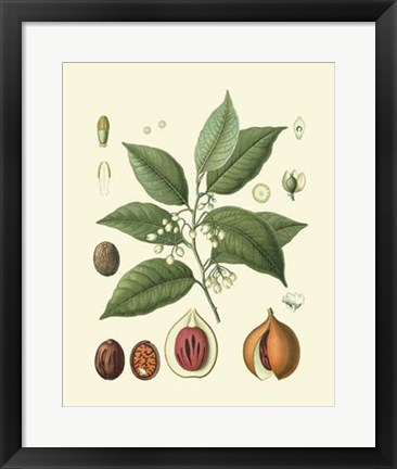 Framed Botanical Glory III Print