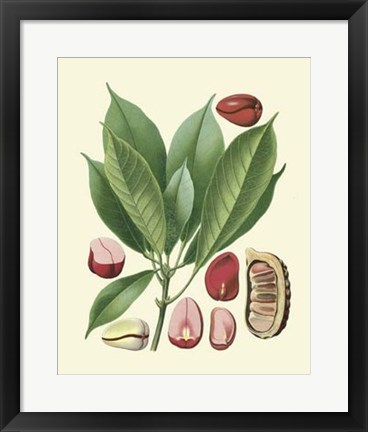 Framed Botanical Glory VI Print