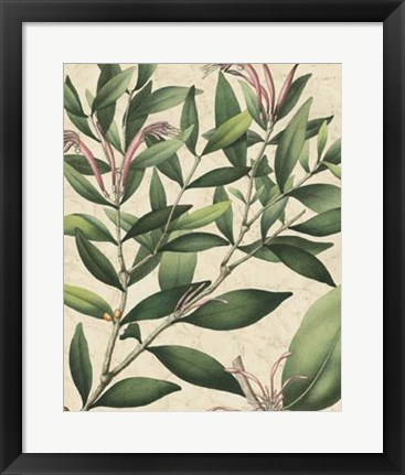 Framed Botanic Beauty II Print