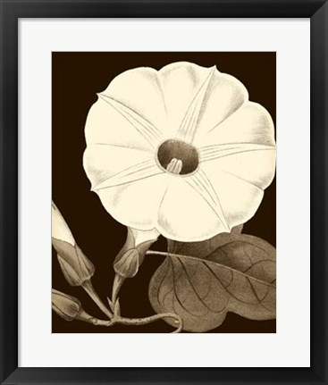 Framed Glorious Blooms I Print