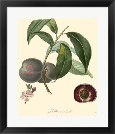 Framed Plums Print