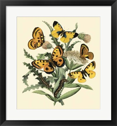 Framed Butterfly Gathering IV Print