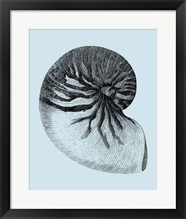 Framed Shells on Aqua II Print