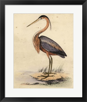 Framed Antique Heron II Print