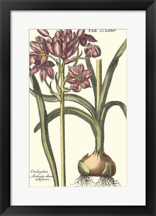 Framed Botanical Beauty I Print