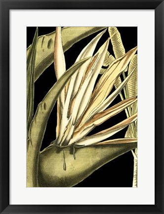 Framed Tranquil Tropical Leaves III Print