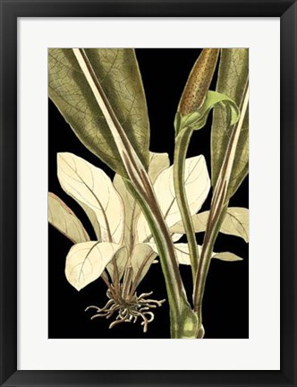 Framed Tranquil Tropical Leaves V Print