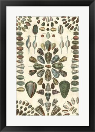 Framed Shell Collection IV Print