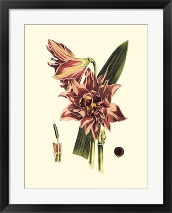 Framed Striking Beauty IV Print