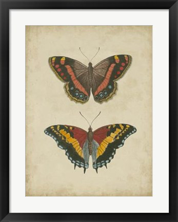 Framed Antique Butterfly Pair IV Print
