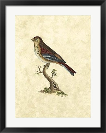 Framed Birds IV Print