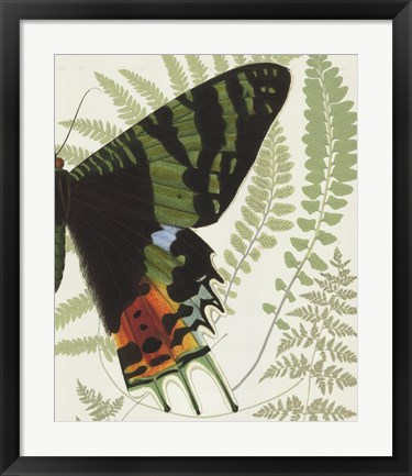 Framed Butterfly Symmetry II Print