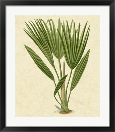 Framed Bourbon Palm Print