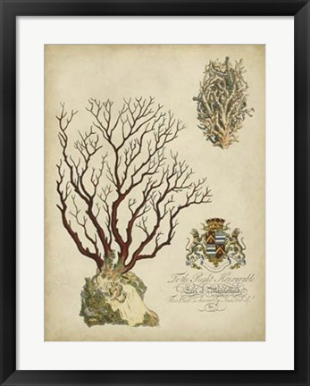 Framed Imperial Coral III Print