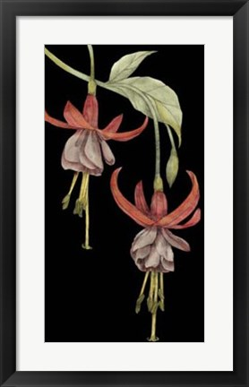 Framed Graphic Fuchsia VI Print