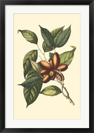 Framed Flourishing Foliage II Print