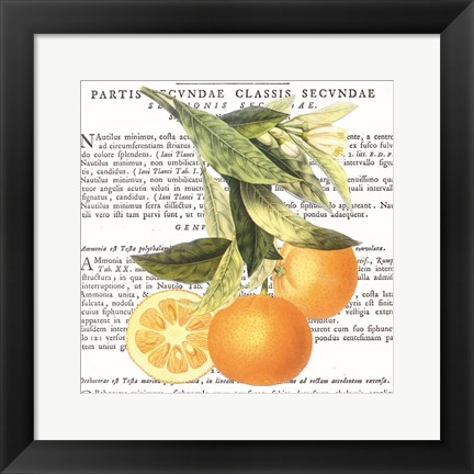 Framed Citrus Edition II Print