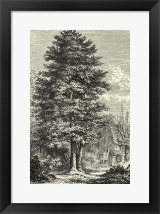 Framed B&W Terry's Trees IV Print