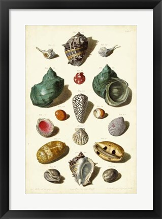 Framed Shells, Tab. V Print