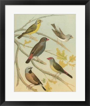Framed Birdwatcher's Delight IV Print