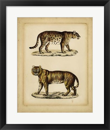 Framed Studies in Natural History I Print