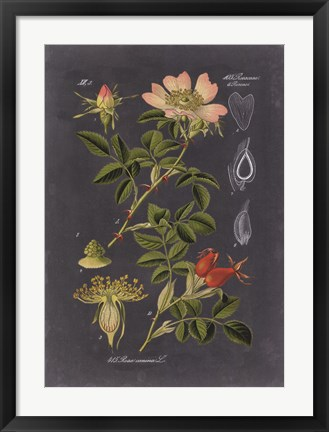 Framed Midnight Botanical I Print