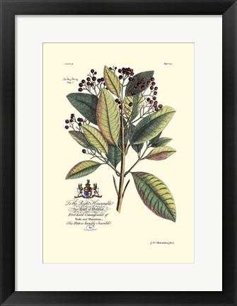 Framed Royal Botanical VI Print
